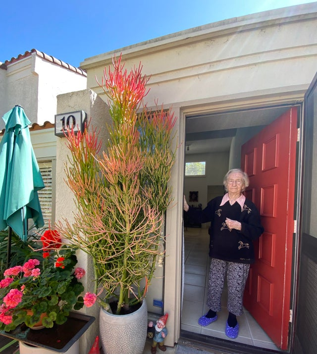 planta de la abuela