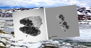 semilla-permafrost