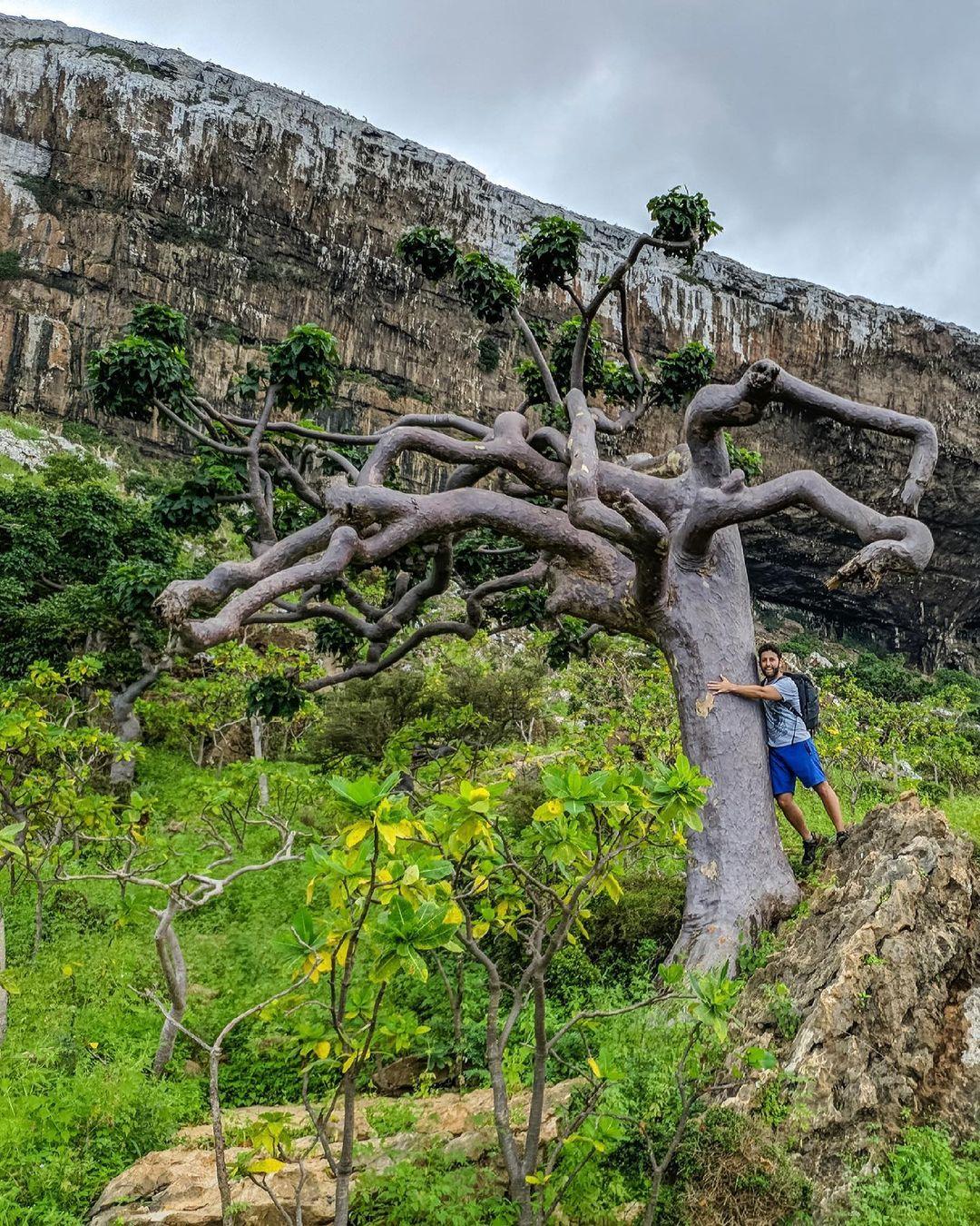 árboles más raros del mundo