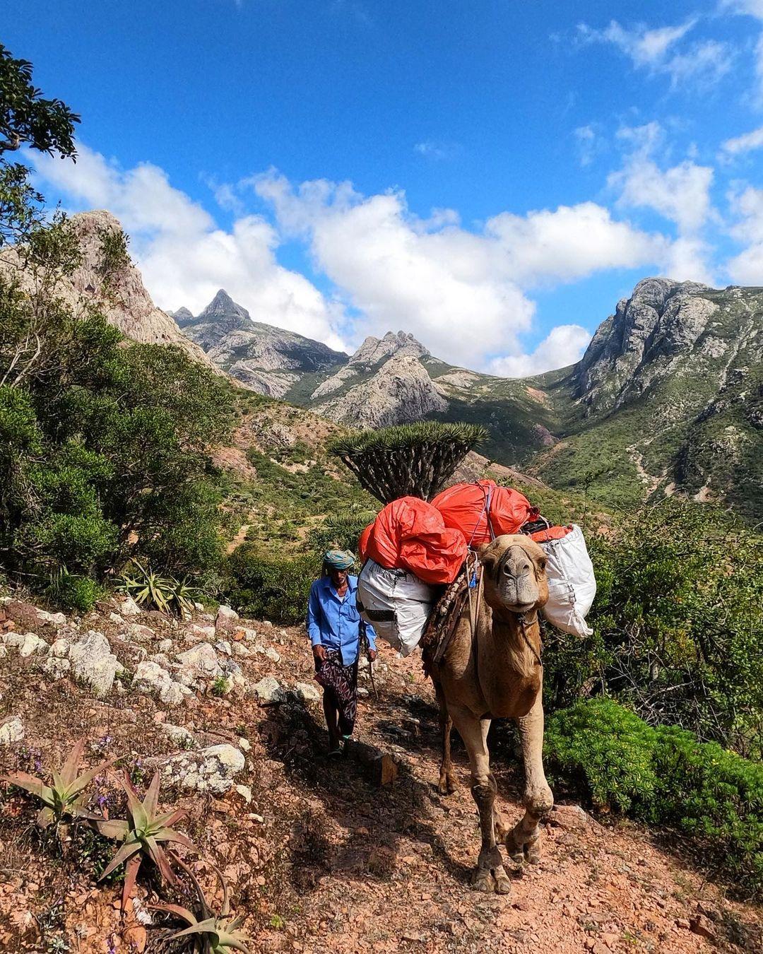 hombre con camello