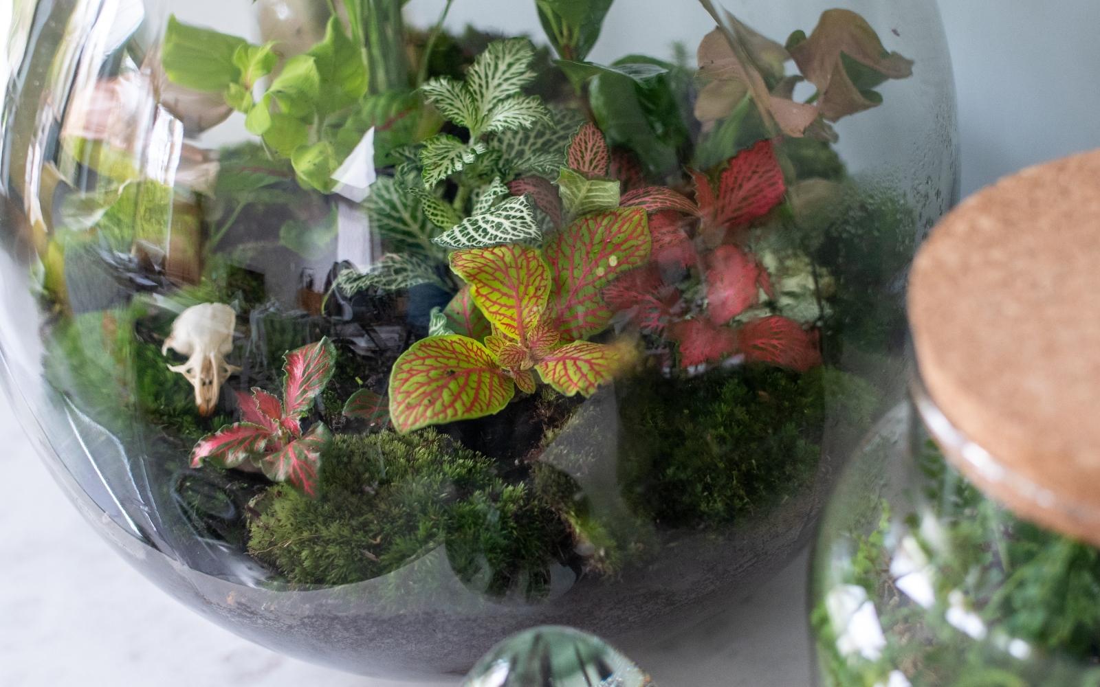 terrario cerrado, plantas
